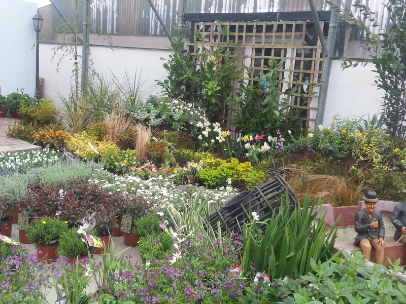 perennial plants newcastle west