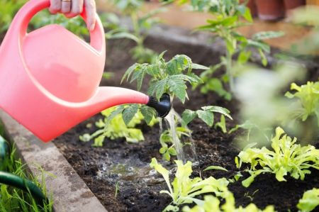 15 x gardening tips for May