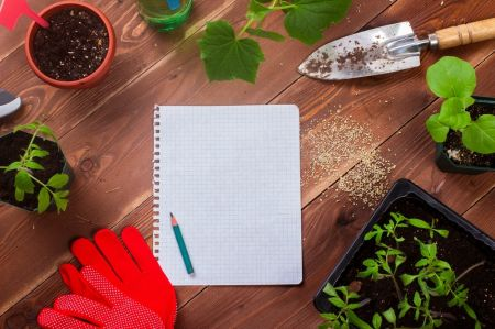 7 New Year's resolutions for gardeners