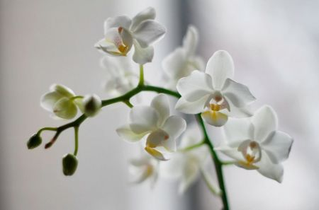Brighten up your home with Orchids
