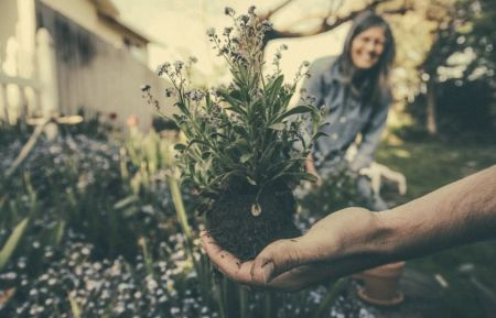 Guide to gardening for the wellbeing