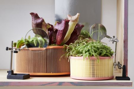 Houseplant of the month: Carnivorous plant