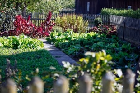 How to maintain your vegetable garden?