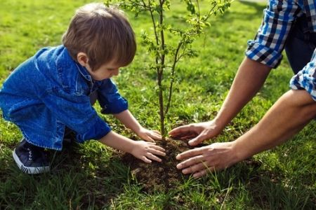 How to plant trees and shrubs?
