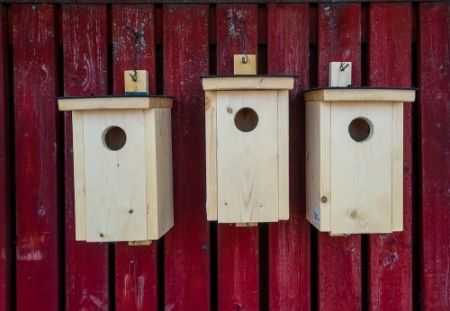 Make birdhouses
