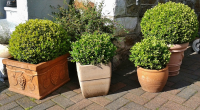 Give your containers a pre-winter once-over