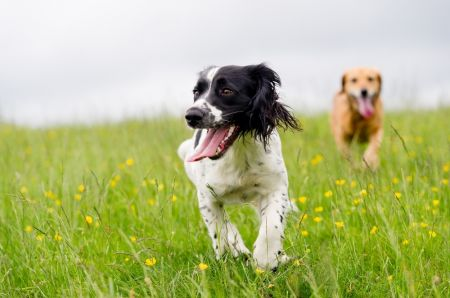 Tips for taking your pet on holiday