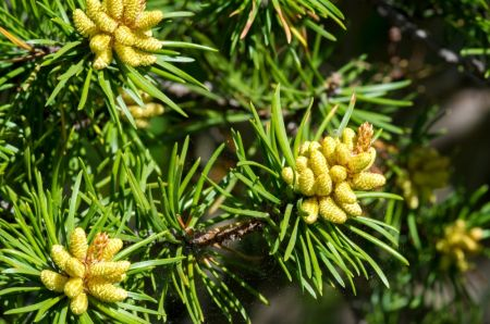 Top 5 reasons to grow conifers