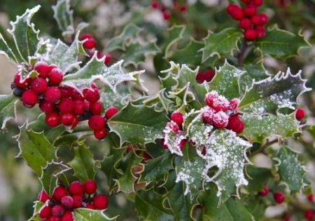 Traditional appeal: why we love Holly and Ivy